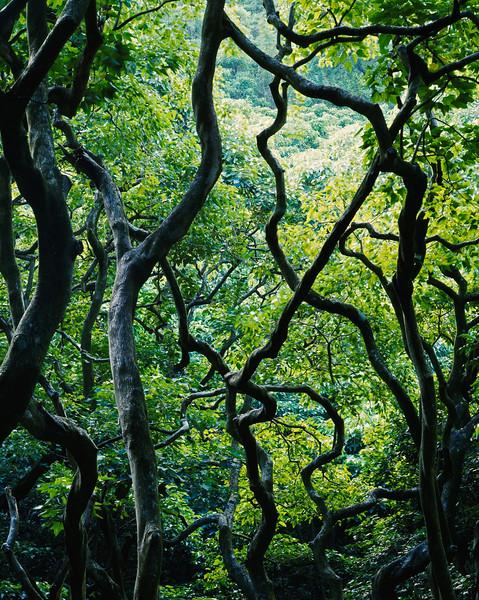 Maui, Hawaii, USA --- Tropical rain forest near Wailua Falls, Island of Maui, Hawaii. --- Image by © Fred Hirschmann/Science Faction/Corbis