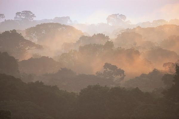 09 Jan 2004, Ecuador --- Morning Fog and Tropical Rainforest Canopy in Ecuador --- Image by © Theo Allofs/Corbis