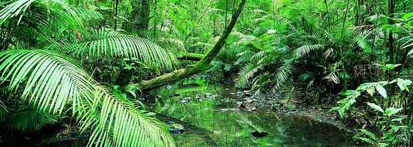 Creek Flowing Through a Palm Grove, Tropical Rainforest, Queensland, Australia --- Image by © 13/Natphotos/Ocean/Corbis