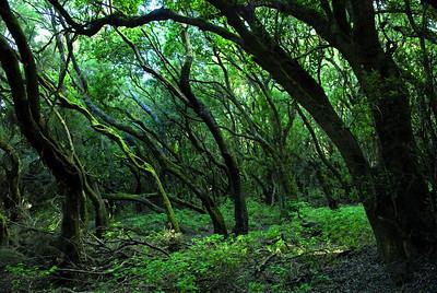 6144x4133, forest, Gomera, trees