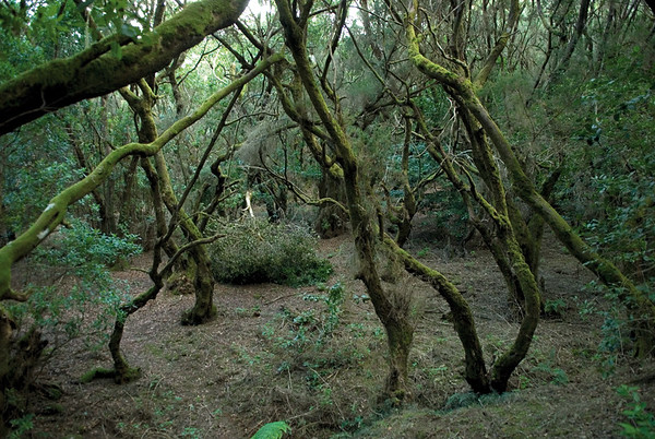 6144x4133, forest, Gomera, trees