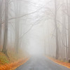 Road in the autumn beech forest