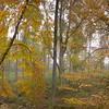 [1] Leaf images, Processed, 10 Bilder, L_001492 - L_001501 - 14122x7103 - SCUL-Smartblend