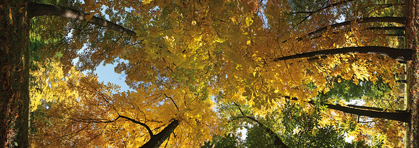 10867x3848, trees, leave, yellow, autumn