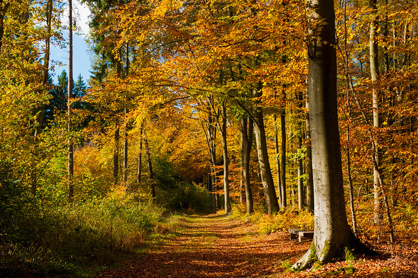 24 Oct 2013, Hamburg, Germany --- Germany, view at autumn wood --- Image by © Jana Mänz/Westend61/Corbis