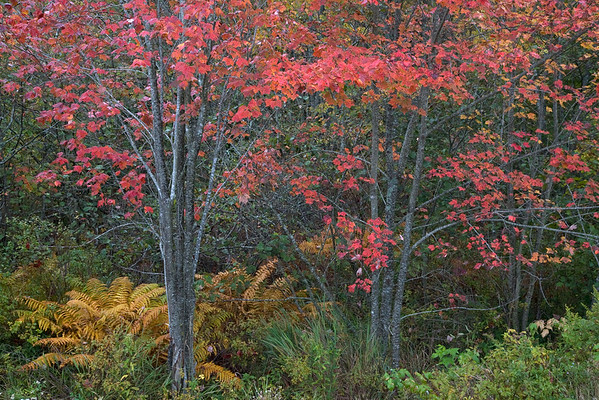 Forest with autumn leaves --- Image by © 237/David Henderson/Ocean/Corbis