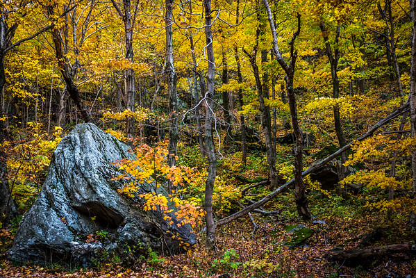09 Oct 2012, Vermont, USA --- Boulder in Forest in Autumn, Smugglers Notch, Lamoille County, Vermont, USA --- Image by © R. Ian Lloyd/Masterfile/Corbis