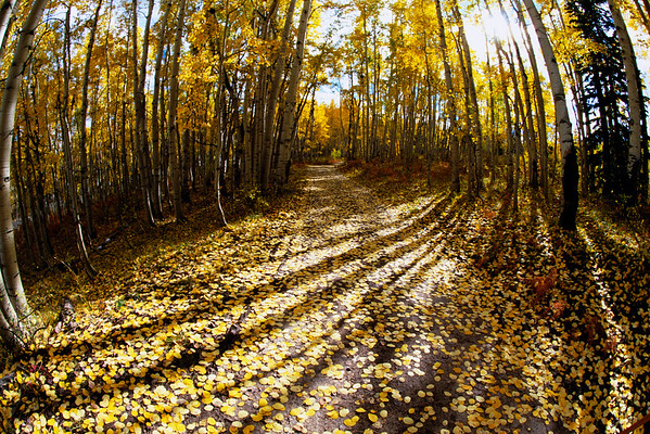 2002 --- Autumn Leaves Blanketing Mountain Pass --- Image by © Terry W. Eggers/CORBIS