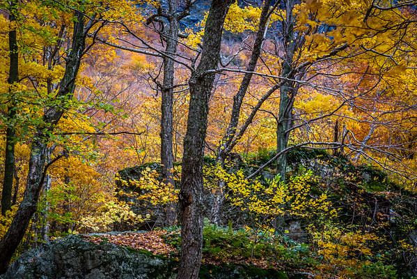 09 Oct 2012, Vermont, USA --- Boulders and Trees in Forest in Autumn, Smugglers Notch, Lamoille County, Vermont, USA --- Image by © R. Ian Lloyd/Masterfile/Corbis