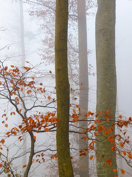 20120000 --- Deciduous forest in autumn mist, in detail --- Image by © Walter Geiersperger/Corbis
