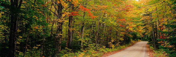 Baxter State Park, Maine, USA --- Forest Path --- Image by © Jeremy Woodhouse/Masterfile/Corbis