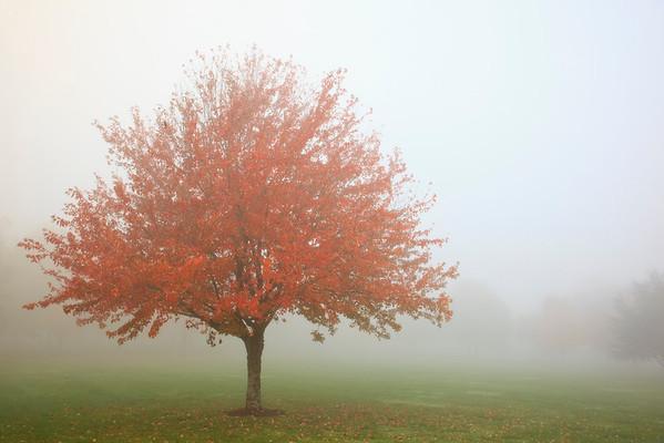 Portland, Oregon, USA --- Fall trees in the fog --- Image by © Craig Tuttle/Corbis