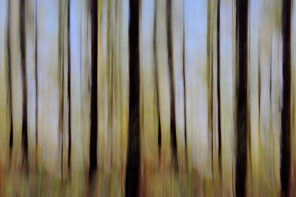 20078x13359 pixel  Abstract forest Autumn, summer, spring, forest, trees, tree, plants, green, orang, brown, blue, red, gold, yellow Panorama, sky, nature, Nobody, modern, abstract, Art   Abstrakter Wald;  Bäume; Baum; Blätter; Zweige; Äste; rot; grün; gelb, gold, blau; Natur; Nobody; Frühling; Sommer; Kunst   Komentar: Roundabout