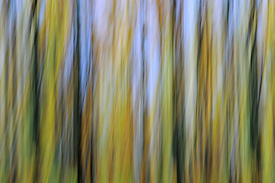 20078 x 13359 pixel  Abstract forest Autumn, summer, spring, forest, trees, tree, plants, green, orang, brown, blue, red, gold, yellow Panorama, sky, nature, Nobody, modern, abstract, Art   Abstrakter Wald;  Bäume; Baum; Blätter; Zweige; Äste; rot; grün; gelb, gold, blau; Natur; Nobody; Frühling; Sommer; Kunst