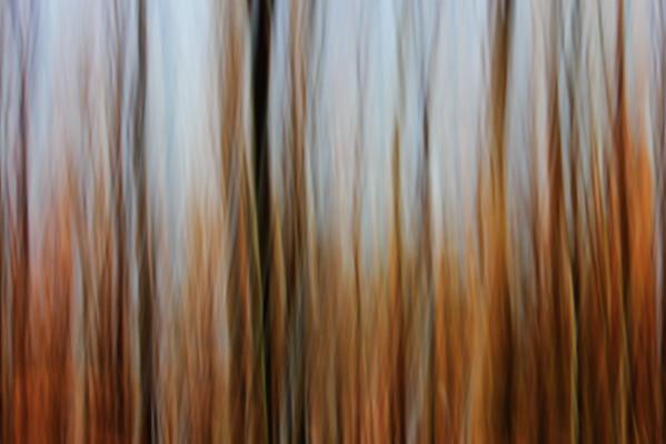 20078x13359 pixel  Abstract forest Autumn, summer, spring, forest, trees, tree, plants,  orang, brown, blue, red, gold, yellow Panorama, sky, nature, Nobody, modern, abstract, Art   Abstrakter Wald;  Bäume; Baum; Blätter; Zweige; Äste; rot; gelb, gold, blau; Natur; Nobody; Frühling; Sommer; Kunst   Komentar: Roundabout