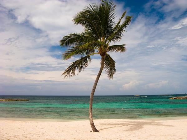 07 Jun 2009, Paradise Island, Bahamas --- A palm tree on a pristine tropical beach under a cloud-filled sky. --- Image by © Diane Cook, Len Jenshel/National Geographic Creative/Corbis