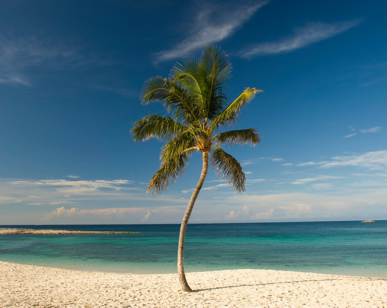05 Jun 2009, Paradise Island, Bahamas --- A palm tree on a pristine tropical beach with blue skies and turquoise water. --- Image by © Diane Cook, Len Jenshel/National Geographic Creative/Corbis