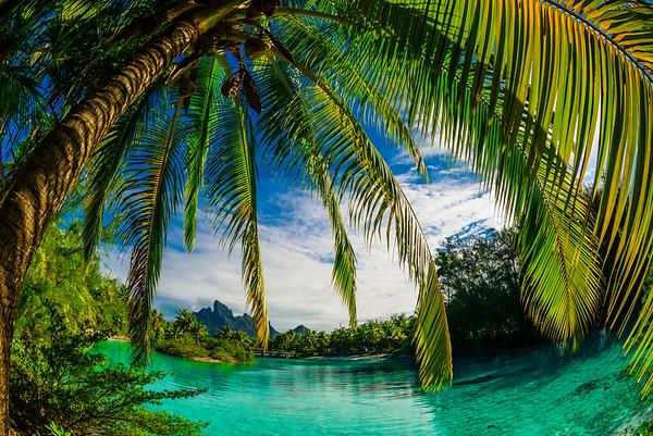 16 Jul 2014, Bora Bora, French Polynesia --- Palm trees and lagoon, Four Seasons Resort Bora Bora, Motu Tehotu, Bora Bora, French Polynesia --- Image by © Blaine Harrington III/Corbis