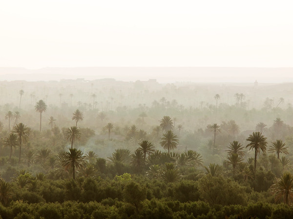 Skoura, Morocco --- Palms of the Skoura Oasis in Morocco at dawn --- Image by © Philip Lee Harvey/Corbis