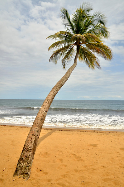 Cameroon --- Palm tree on the beach in Kribi, Cameroon, Central Africa, Africa --- Image by © Fabian von Poser/imageBROKER/Corbis