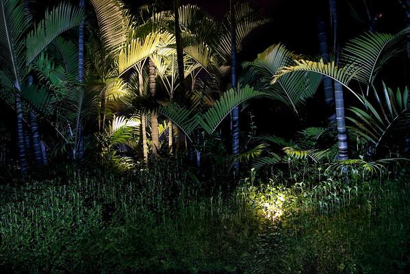 Brazil --- Hotel garden at night, Brazil --- Image by © Matthias Buchholz/Matthias Buchholz/Corbis
