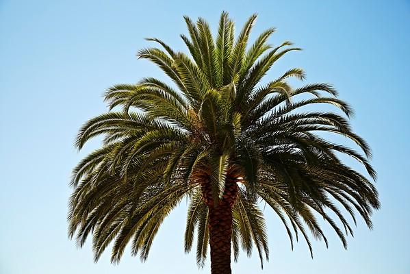 Los Angeles, California, USA --- Palm tree --- Image by © JPM/Corbis