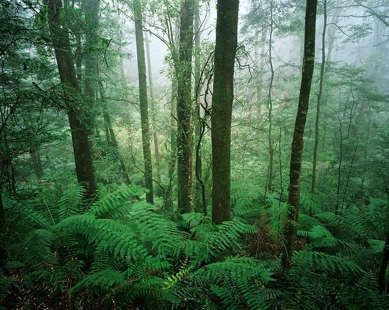 Melba Gully State Park, Victoria, Australia --- Temperate Rainforest --- Image by © moodboard/Corbis