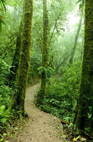 Path through cloud forest --- Image by © Zack Seckler/Corbis