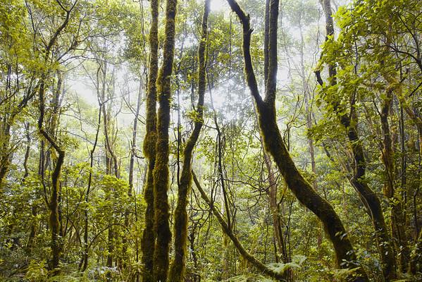 Tenerife, Spain --- Green trees in rainforest, Tenerife, Spain  --- Image by © D & C/Corbis