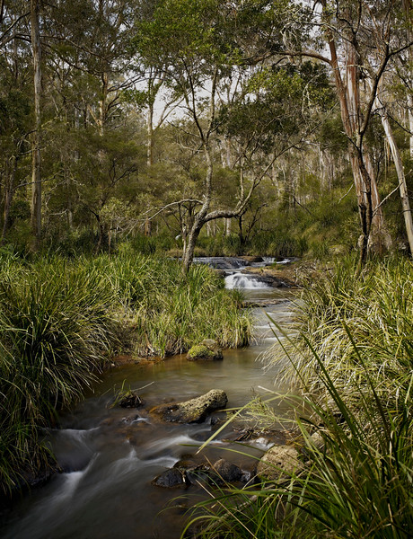 Australia --- Queen Mary falls, stream, park and rainforest --- Image by © Michael Pole/Corbis