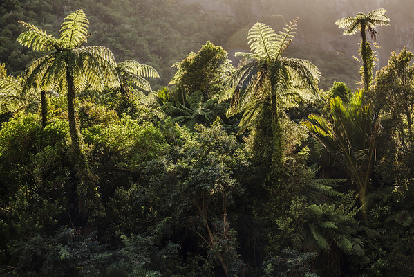 South Island, New Zealand --- Tree ferns and forest on the Porari River Track, South Island, New Zealand --- Image by © David Madison/Corbis