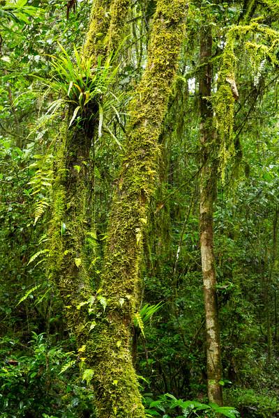 29 Mar 2013, Ranomafana National Park, Madagascar --- Madagascar, Fianarantsoa Province, Ranomafana National Park, Lush vegetation in tropical rainforest, part of the Rainforests of the Atsinanana World Heritage Site --- Image by © Paul Souders/Corbis