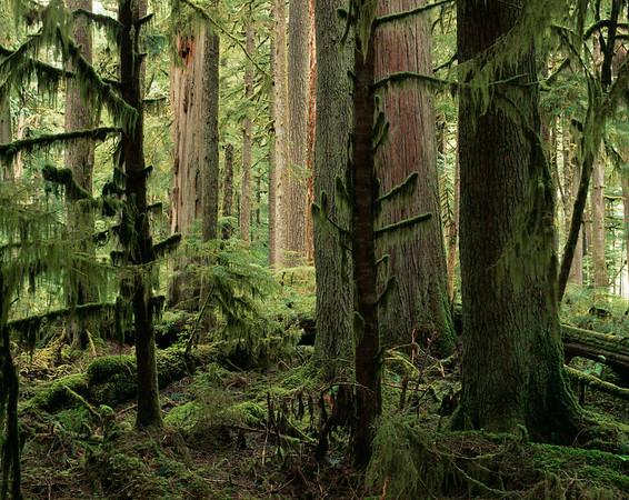 Olympic National Park, Washington State, USA --- Olympic National Park, Washington --- Image by © cultura/Corbis