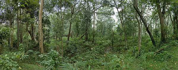 Periyar National Park, India --- Rain forest in Periyar National Park --- Image by © Erik P./Corbis