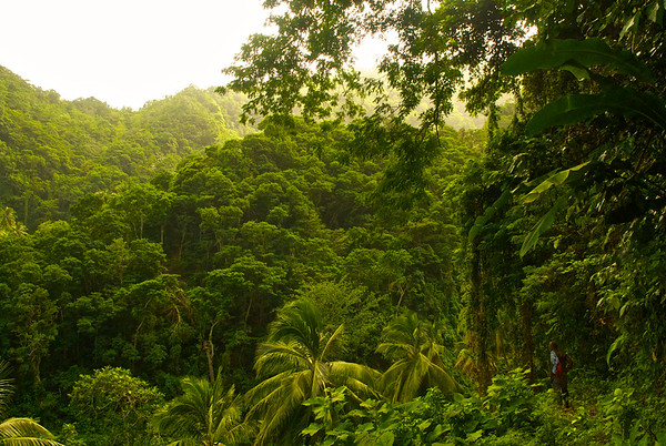 12 Nov 2007, Dominica --- A view from the Waitukubuli National Trail near Cape Capucin. --- Image by © Jad Davenport/National Geographic Creative/Corbis