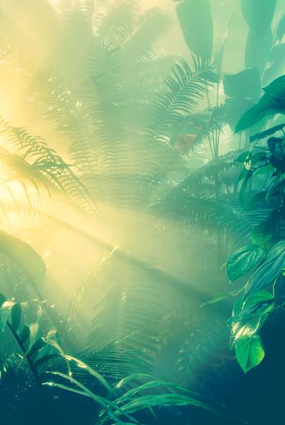 Morning light on rainforest vegetation --- Image by © Frans Lanting/Corbis