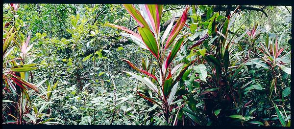 Regenwald Panorama