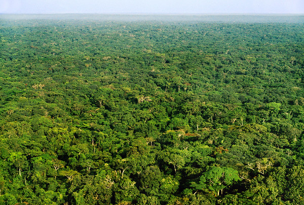 February 1991, Democratic Republic of the Congo --- Rainforest in Democratic Republic of Congo --- Image by © Frans Lanting/Corbis