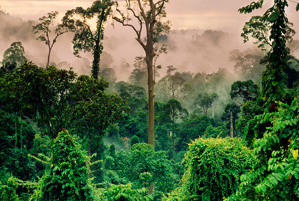 Danum Valley Conservation Area, Malaysia --- Misty rainforest in Danum Valley, Borneo.   Location: Danum Valley, Malaysia. --- Image by © Frans Lanting/Corbis