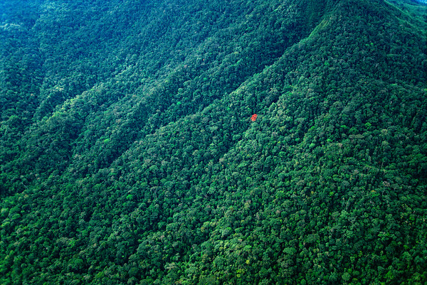 Single red flowering tree surrounded by the thick deep green of the rainforest canopy in the Vilcabamba Mountains of Peru.   Location: Peru. --- Image by © Frans Lanting/Corbis