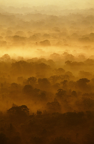 Morning fog hover over the lowland rainforest in Manu National Park, Peru.   Location: Peru. --- Image by © Frans Lanting/Corbis