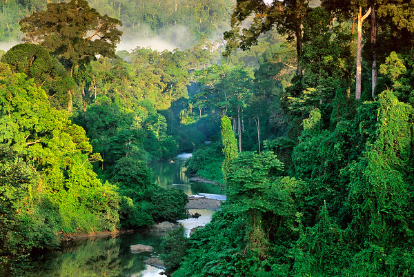 ca. 1991 or 1992, Danum Valley Conservation Area, Malaysia --- River in the lowland rainforest of the Danum Valley on Borneo, Sabah State, Malaysia. --- Image by © Frans Lanting/Corbis