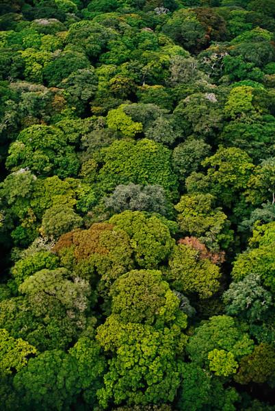 Democratic Republic of the Congo --- Rainforest Canopy in Democratic Republic of Congo --- Image by © Frans Lanting/Corbis