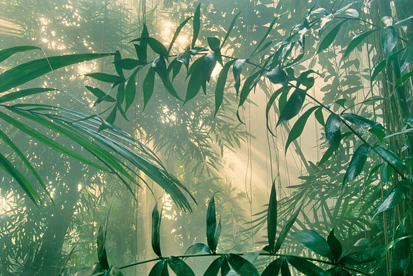 Costa Rica --- Rainforest in Mist --- Image by © Frans Lanting/Corbis