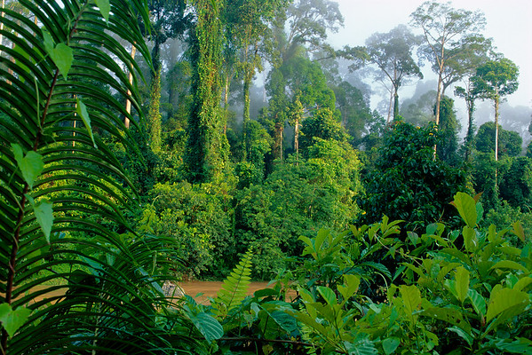Danum Valley Conservation Area, Malaysia --- Lowland Rainforest in Danum Valley --- Image by © Frans Lanting/Corbis