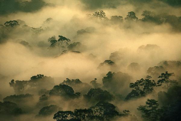Danum Valley Conservation Area, Malaysia --- Morning mist over rainforest in Danum Valley, Borneo.   Location: Danum Valley, Malaysia. --- Image by © Frans Lanting/Corbis