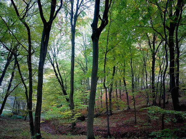 BAUMSTAMM --- Image by © Aram Radomski / www.berlintapete.de