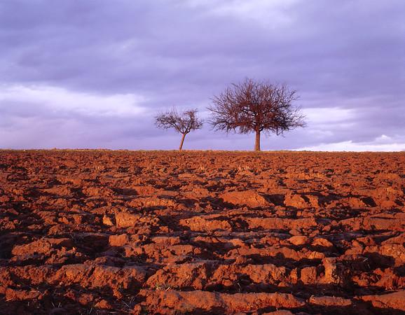 Ploughed field, autumn, at dusk --- Image by © Herbert Kehrer/Corbis