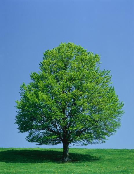 Tree, spring --- Image by © Gerolf Kalt/Corbis