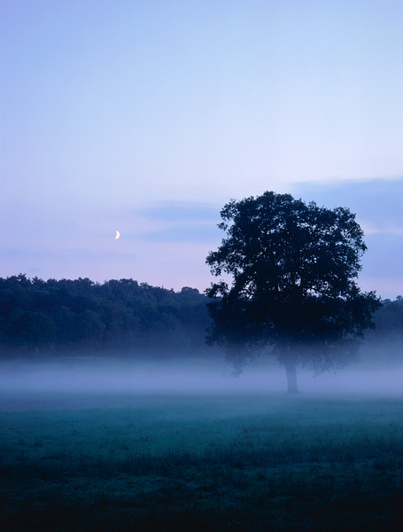 Tree and forest meadow, at dawn --- Image by © Claudius/Corbis